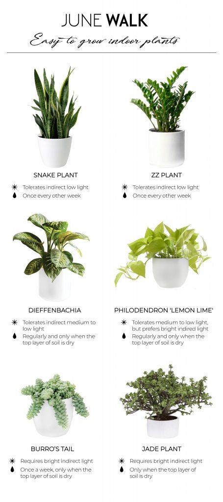 June+Walk+Design+Indoor+Plants+Bangalore+Interior+Design+Studio